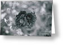 Black Rose With Bokeh Greeting Card