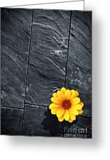 Black Schist Flower Greeting Card by Carlos Caetano