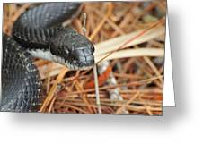 Black Snake Greeting Card