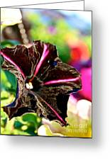 Black Spider Petunia Greeting Card
