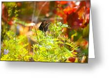 Black Swallow Tail Butterfly In Autumn Colors Greeting Card