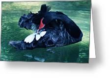 Black Swan Grooming Greeting Card