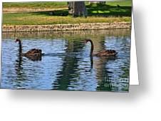 Black Swan's In Palm Springs Greeting Card
