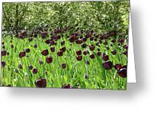 Black Tulips Greeting Card