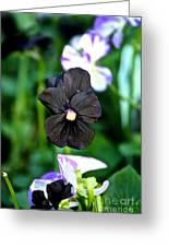 Black Violet Greeting Card
