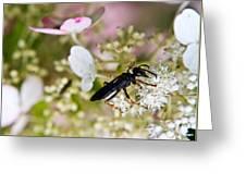 Black Wasp 1 Greeting Card