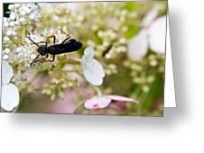 Black Wasp 2 Greeting Card