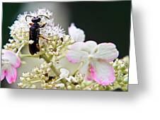 Black Wasp 3 Greeting Card