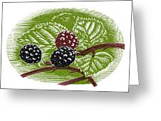 Blackberries, Woodcut Greeting Card by Gary Hincks