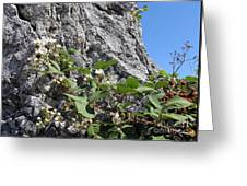 Blackberry On The Rock 04 Greeting Card