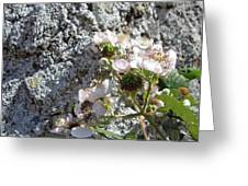 Blackberry On The Rock Square Format Greeting Card