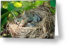 Blackbird Nest Greeting Card