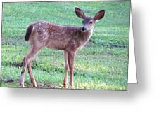 Blacktail Fawn Portrait Greeting Card