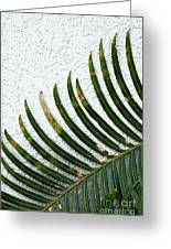 Bladed Leaf Against Stucco Wall Greeting Card