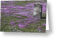 Blank Colonial Tombstone Amidst Graveyard Phlox Greeting Card