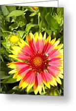 Blanket Flower Greeting Card