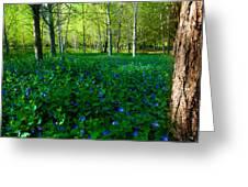 Blanket Of Flowers Greeting Card