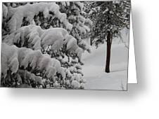 Blanket Of Snow Greeting Card