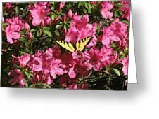 Blaze Of Spring Greeting Card