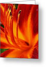 Blazing Lily Greeting Card