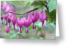 Bleeding Heart Greeting Card by Gail Jankus and Photo Researchers
