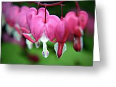 Bleeding Hearts Dicentra Greeting Card