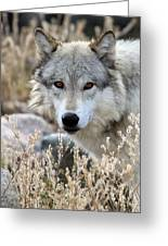 Blending Wolf  Greeting Card