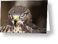 Blind Buzzard Greeting Card
