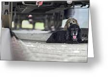 Blonde And Black Dogs Greeting Card