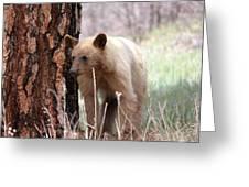Blonde Bear Greeting Card