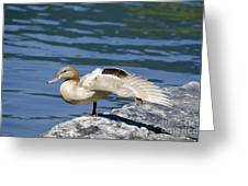 Blonde Duck Greeting Card