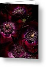 Blood Red Anemones Greeting Card
