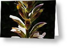 Bloom 1 Greeting Card