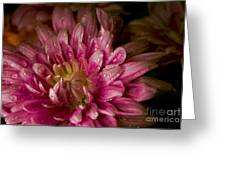 Bloom Greeting Card by David Taylor