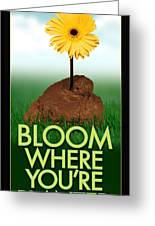 Bloom Where You Are Planted Poster Greeting Card