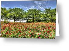 Bloomed Poppy Greeting Card