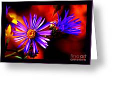 Blooming Asters Greeting Card