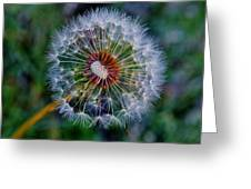 Blooming Dandelion Greeting Card