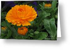 Blooming Gold Greeting Card