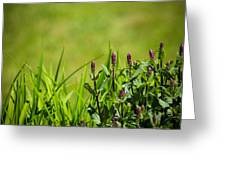 Blooming In Purple Greeting Card