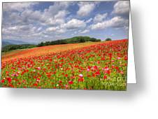 Blooming In The Plateau Greeting Card