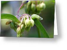 Blooming Life Greeting Card