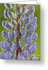 Blooming Lupine Greeting Card by Sean Griffin