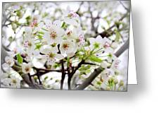 Blooming Ornamental Tree Greeting Card