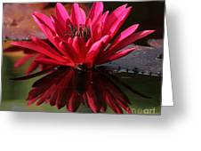 Blooming Red Lilly Greeting Card