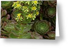 Blooming Succulents Greeting Card
