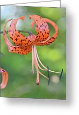 Blooming Tiger Greeting Card