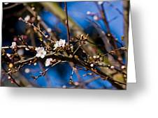 Blooming Tree With White Flowers Greeting Card
