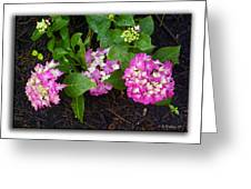 Blossoms And Rain Drops Greeting Card