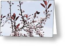 Blossoms In Time Greeting Card